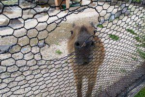 ふれあい動物園に水族館「別府地獄めぐり」は小さな子どもでも楽しめます!