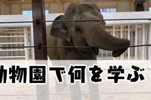 動物園は何を学ぶ場所?親の言動が子どもの学びに